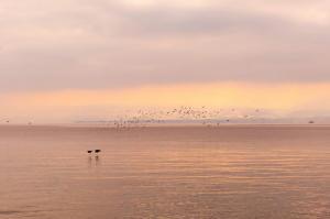 Rolle lac Léman